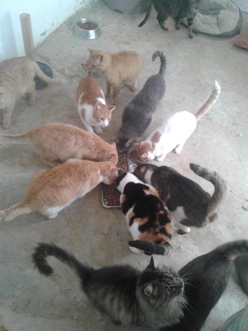Aide CCTNA pour les animaux du refuge de la PAT 50861910