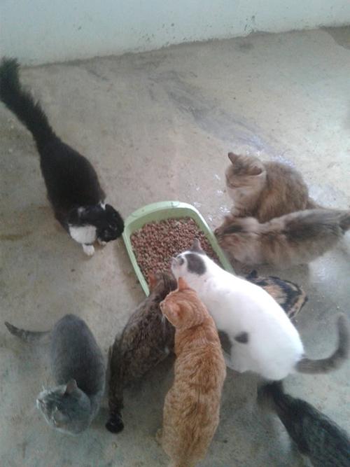Aide CCTNA pour les animaux du refuge de la PAT 51174311