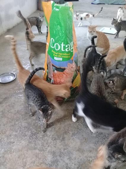 Aide CCTNA pour les animaux du refuge de la PAT 68282010