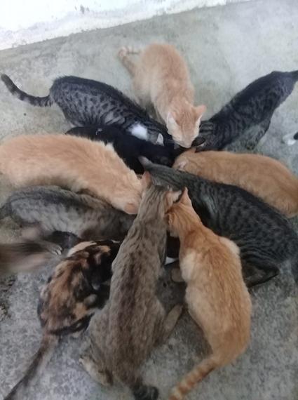 Aide CCTNA pour les animaux du refuge de la PAT 68957510