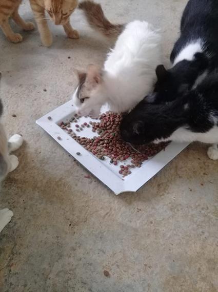 Aide CCTNA pour les animaux du refuge de la PAT 69263410