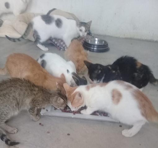 Aide CCTNA pour les animaux du refuge de la PAT 69383610