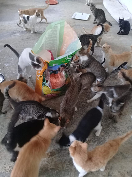 Aide CCTNA pour les animaux du refuge de la PAT 69465310