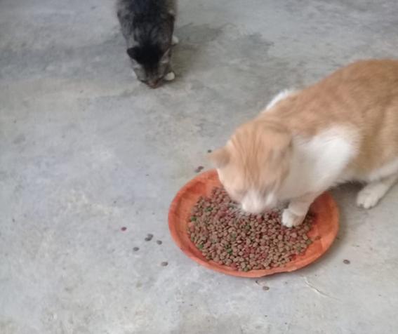 Aide CCTNA pour les animaux du refuge de la PAT 69640010