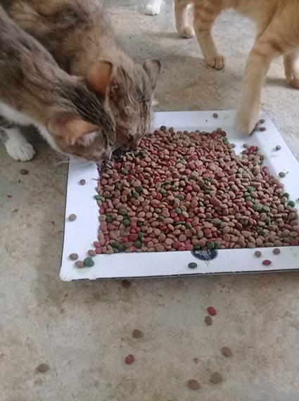 Aide CCTNA pour les animaux du refuge de la PAT 69691810