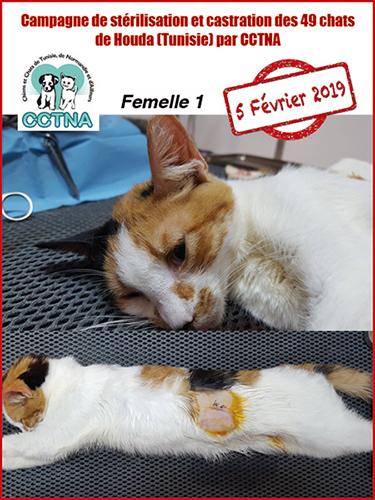 Aide CCTNA pour les animaux de HOUDA - Page 2 Affich10