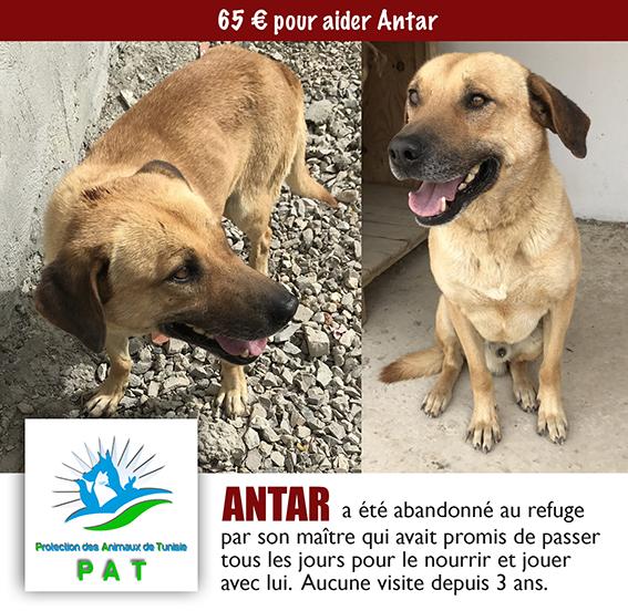 ANTAR, identifié 941.000.017.846.945, en refuge à Tunis Antarp10