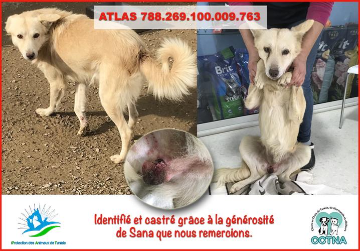 MARS 2019 : aide pour stériliser 8 chiens du refuge PAT Tunis Atlasm10