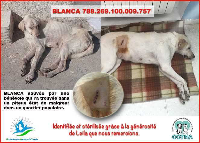 MARS 2019 : aide pour stériliser 8 chiens du refuge PAT Tunis Blanca10