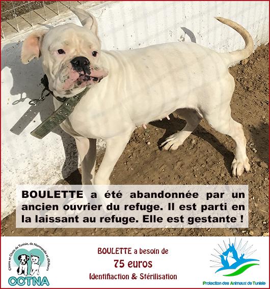 JANVIER 2019 : Aide pour stériliser 6 chiens femelle du refuge de la PAT Boulet10
