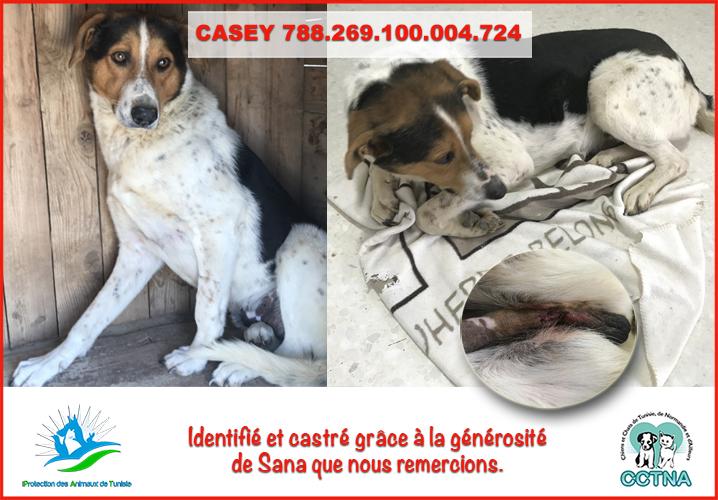 MARS 2019 : aide pour stériliser 8 chiens du refuge PAT Tunis Caseym10
