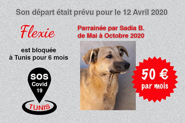 Pandémie COVID19 - Nos protégés bloqués à Tunis Cctna_26