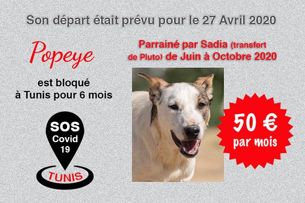 Pandémie COVID19 - Nos protégés bloqués à Tunis Cctna_38