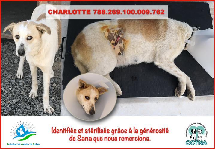 MARS 2019 : aide pour stériliser 8 chiens du refuge PAT Tunis Charlo10