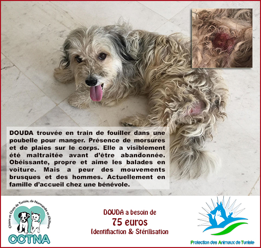 JANVIER 2019 : Aide pour stériliser 6 chiens femelle du refuge de la PAT Douda010