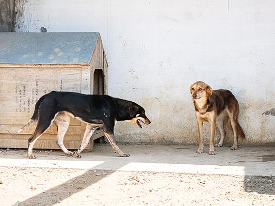 VIOLETTE, identifiée 941.000.023.236.592, en refuge à Tunis Dsc07310