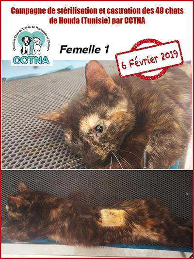 Aide CCTNA pour les animaux de HOUDA - Page 2 F110