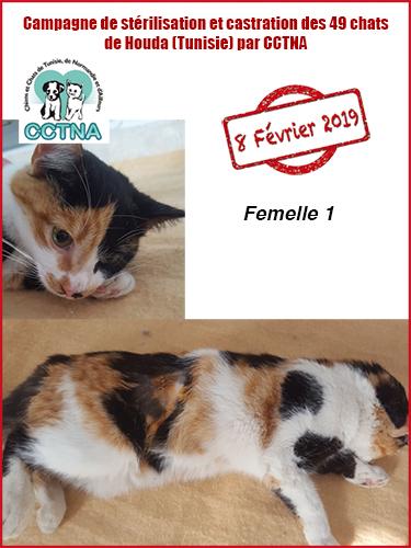 Aide CCTNA pour les animaux de HOUDA - Page 2 F112