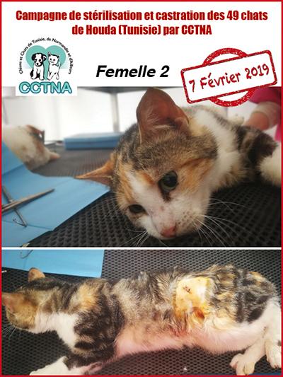 Aide CCTNA pour les animaux de HOUDA - Page 2 F211