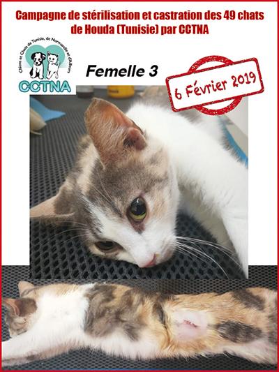 Aide CCTNA pour les animaux de HOUDA - Page 2 F310