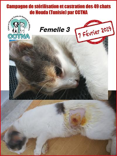 Aide CCTNA pour les animaux de HOUDA - Page 2 F311