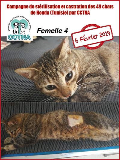Aide CCTNA pour les animaux de HOUDA - Page 2 F410