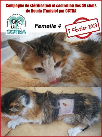 Aide CCTNA pour les animaux de HOUDA - Page 2 F411