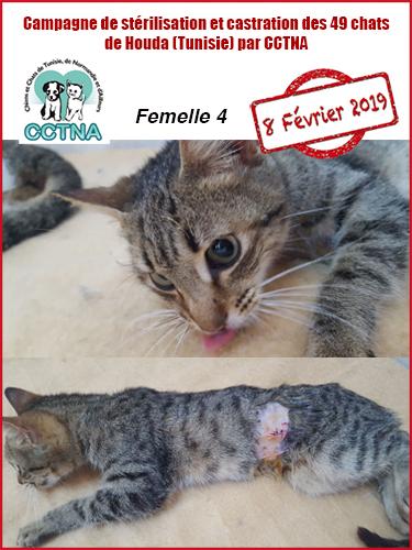 Aide CCTNA pour les animaux de HOUDA - Page 2 F412