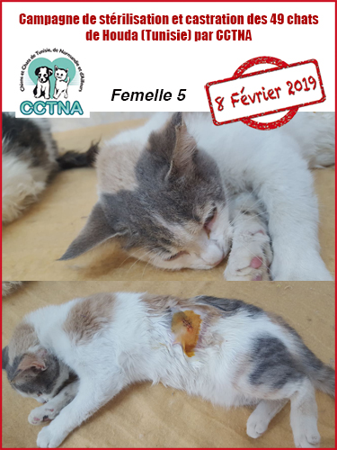 Aide CCTNA pour les animaux de HOUDA - Page 2 F512