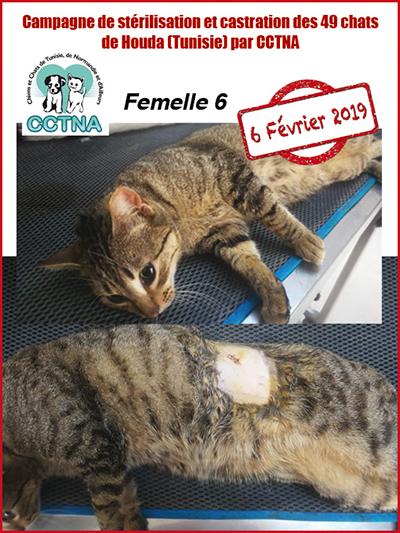 Aide CCTNA pour les animaux de HOUDA - Page 2 F610