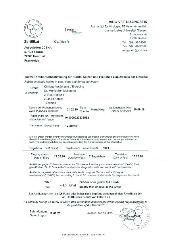 VIOLETTE, identifiée 941.000.023.236.592, en refuge à Tunis Fzovr215