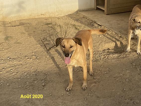 ANTAR, identifié 941.000.017.846.945, en refuge à Tunis Img_0920