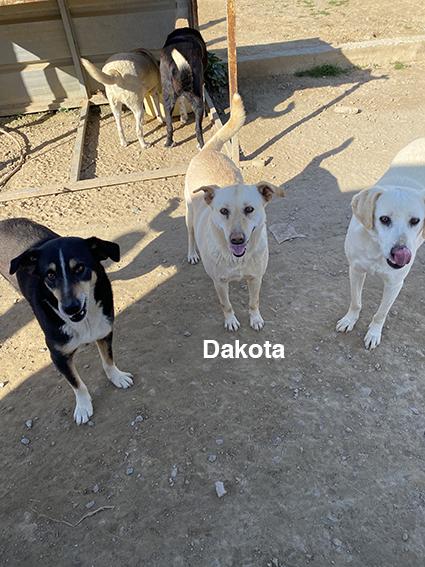 DAKOTA, identifiée 941.000.017.846.972, en pension dpt 78 Img_2525