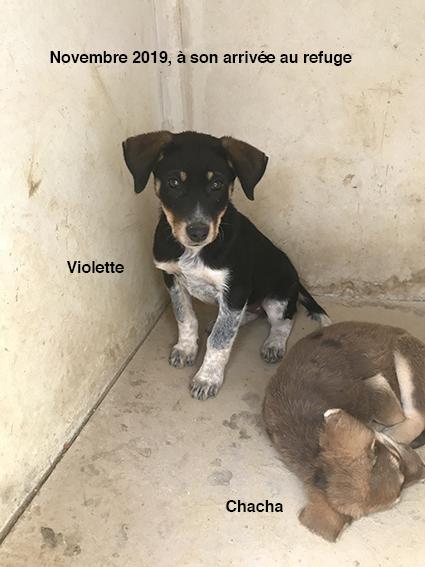 VIOLETTE, identifiée 941.000.023.236.592, en refuge à Tunis Img_8832