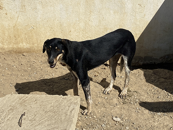 VIOLETTE, identifiée 941.000.023.236.592, en refuge à Tunis Img_9056