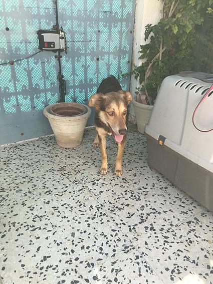 CHOCOLINE, identifiée 941.000.023.236.590, en refuge à Tunis Img_9120