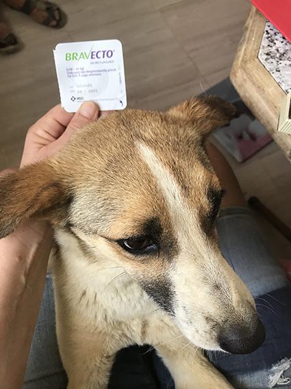 """Campagne """"antiparasitaire"""" pour les chiens du refuge PAT Img_9212"""