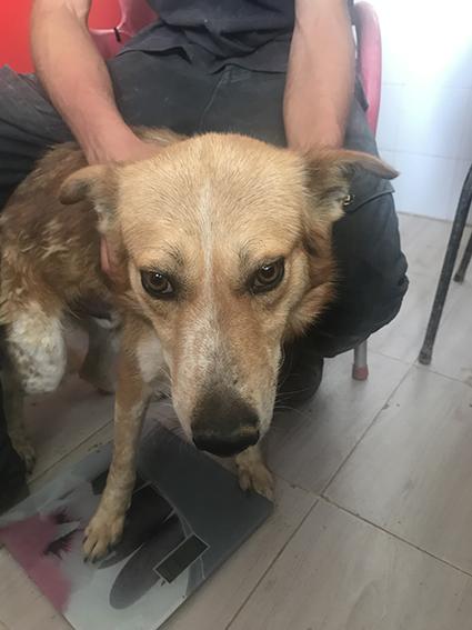 """Campagne """"antiparasitaire"""" pour les chiens du refuge PAT Img_9611"""