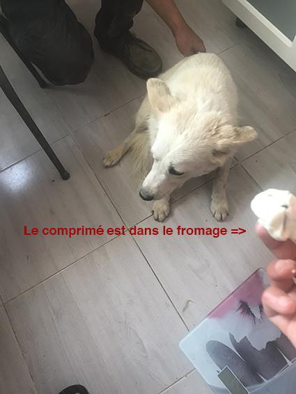 """Campagne """"antiparasitaire"""" pour les chiens du refuge PAT Img_9612"""