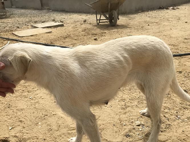Aide pour stériliser 22 chiens du refuge de la PAT Lilly010