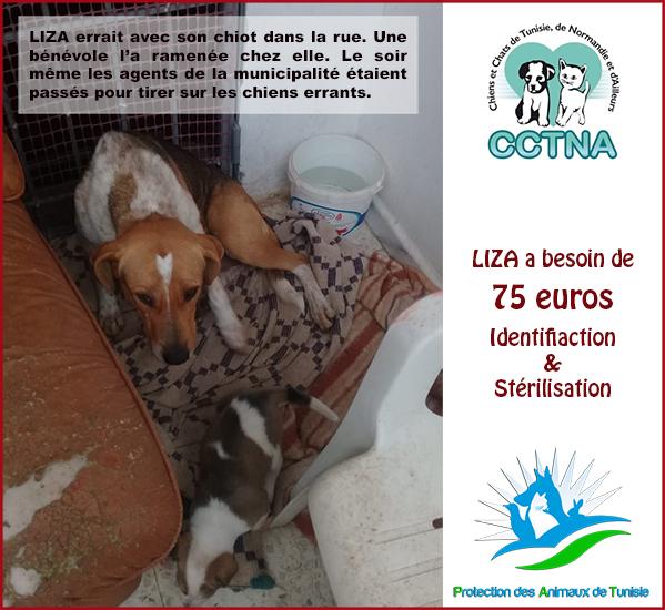 JANVIER 2019 : Aide pour stériliser 6 chiens femelle du refuge de la PAT Liza11