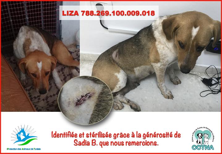 JANVIER 2019 : Aide pour stériliser 6 chiens femelle du refuge de la PAT Lizame10