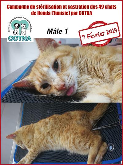 Aide CCTNA pour les animaux de HOUDA - Page 2 M111