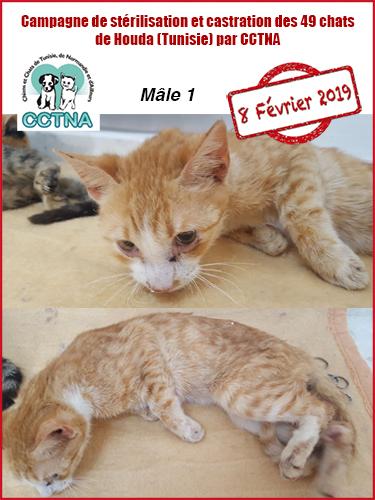Aide CCTNA pour les animaux de HOUDA - Page 2 M112