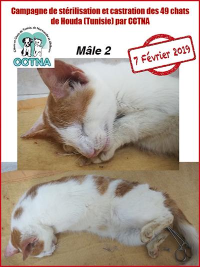 Aide CCTNA pour les animaux de HOUDA - Page 2 M211