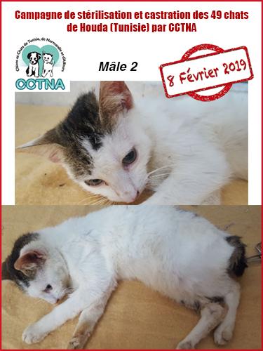 Aide CCTNA pour les animaux de HOUDA - Page 2 M212