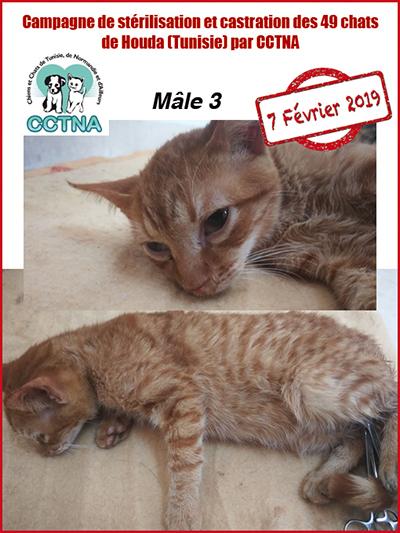 Aide CCTNA pour les animaux de HOUDA - Page 2 M311