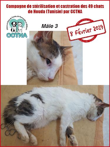 Aide CCTNA pour les animaux de HOUDA - Page 2 M312