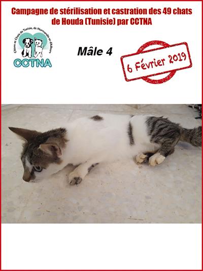 Aide CCTNA pour les animaux de HOUDA - Page 2 M4bis10