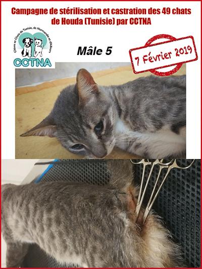 Aide CCTNA pour les animaux de HOUDA - Page 2 M510